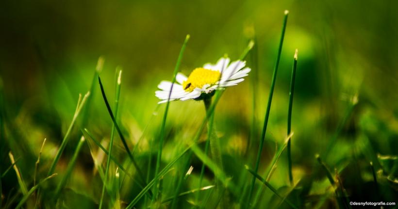 klein-bloempje-1