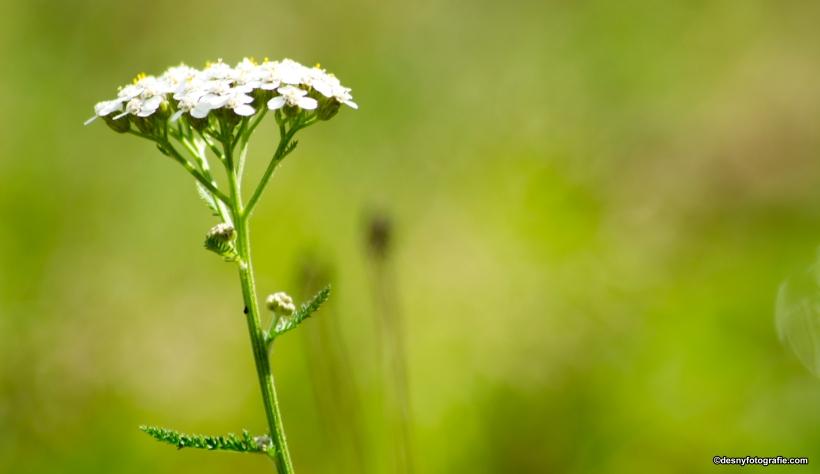 witte-bloem-macro